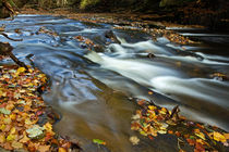 Autumn Leaves In Water II by David Pringle