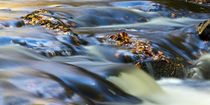 Autumn Leaves In Water III by David Pringle