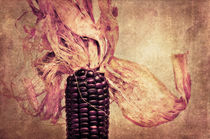 The corn on the cob by AD DESIGN Photo + PhotoArt