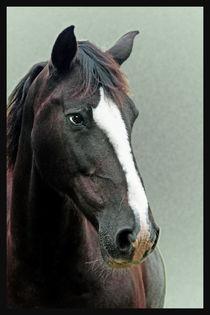 Horse-head1