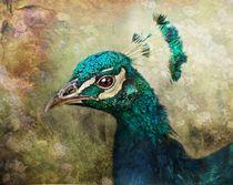 Peacock by Pauline Fowler