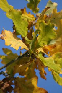 Blätter von Jens Berger