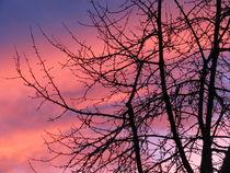 pefektes farbenspiel beim sonnenuntergang 1 by elfriede zitas