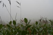 fog by Federico C.