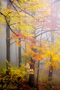 Fall and Fog by David Pinzer