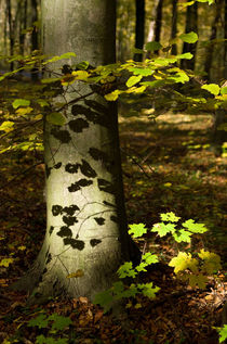 Shadows of leaves by photogatar