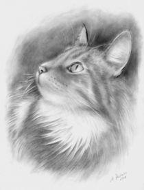 Katzenportrait Bleistiftzeichnung  von Marita Zacharias