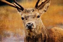 Deer on Canvas by Derek Beattie