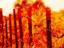 Wildfire von Robert Ball