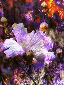 Wild Flower by Robert Ball