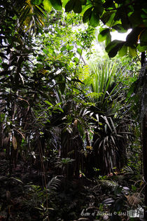 Masoala Rainforest by sisterofdarkness