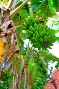 Grüne Bananen by Gina Koch