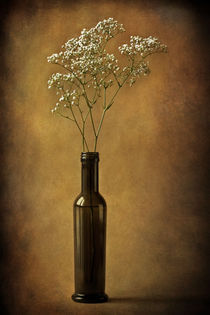 The olive oil bottle von Barbara Corvino