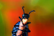 Öl Käfer by Eckart  Mayer