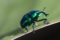 Metallic-bug-5992-c