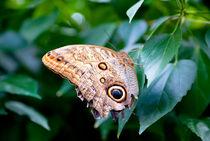 Tropischer Schmetterling im Grünen by Gina Koch