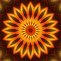 Mandalasonnenblume
