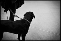 The Airport Dog by Viktoria Morgenstern
