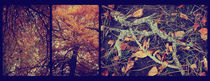 Autumn Leaves Triptych von Sybille Sterk