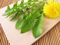 Frischer Löwenzahn für Salat von Heike Rau