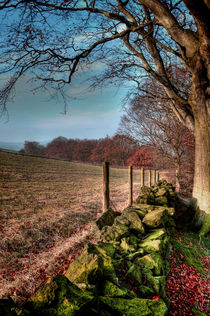 Chevin Dry Stone Wall #2  von Colin Metcalf