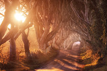The Dark Hedges by Matthias Haker