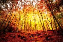 Autumn-wallpaper-10