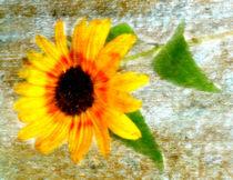 Sonnenblüte von Kerstin Runge