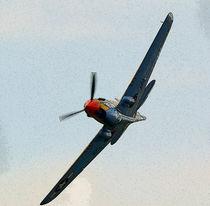 P40 Warhawk by Nigel  Bangert