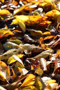 Leaves by Nigel  Bangert