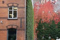 a fragment of Copenhagen by Milena Zindovic