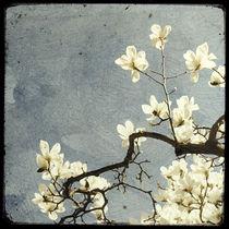 Un-peu-du-printemps