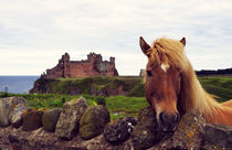 Lovely horse and Tantallon Castle von RicardMN Photography
