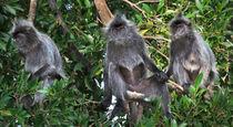 Three Monkeys von Louise Heusinkveld
