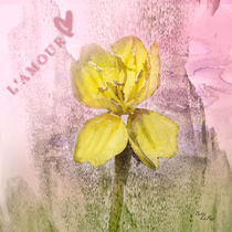 Yellow Wildflower Love by Betty LaRue