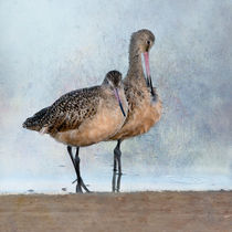Marbled Godwit Pair von Betty LaRue
