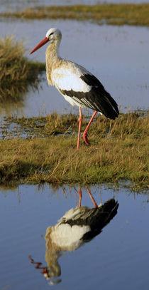 Storch von Jens Berger
