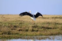 Storch by Jens Berger