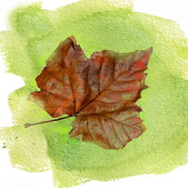 Autumn Leaf Watercolor by Betty LaRue