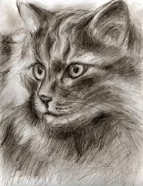 Cat-drawing2