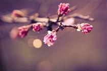 Winterblüten von sylbe