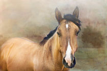 Buckskin Quarter Horse by Betty LaRue