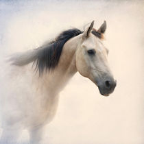 Quarter Horse Portrait by Betty LaRue