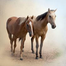 Horse Companions von Betty LaRue