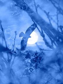 Shadow World Blue by Robert Ball