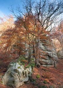 Autumn Forest 4 by Maciej Markiewicz