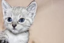 Babykatze von Katrin Lantzsch