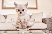 Babycat by Katrin Lantzsch