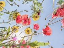 Blumenwiese 3 by Katrin Lantzsch