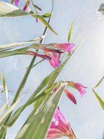 Blumenwiese 4 by Katrin Lantzsch